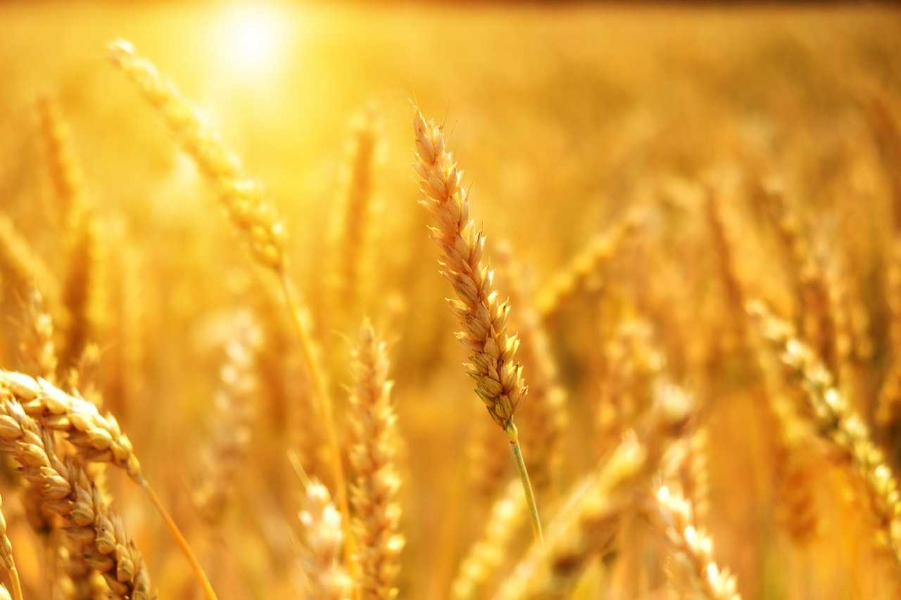 La relación entre la Biomasa y la Agricultura
