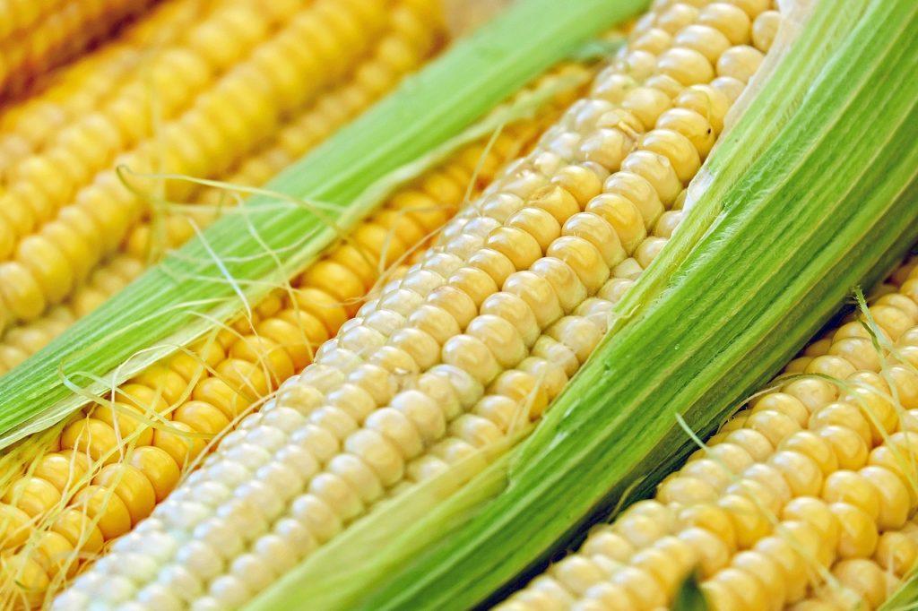 Biomasa de Maíz