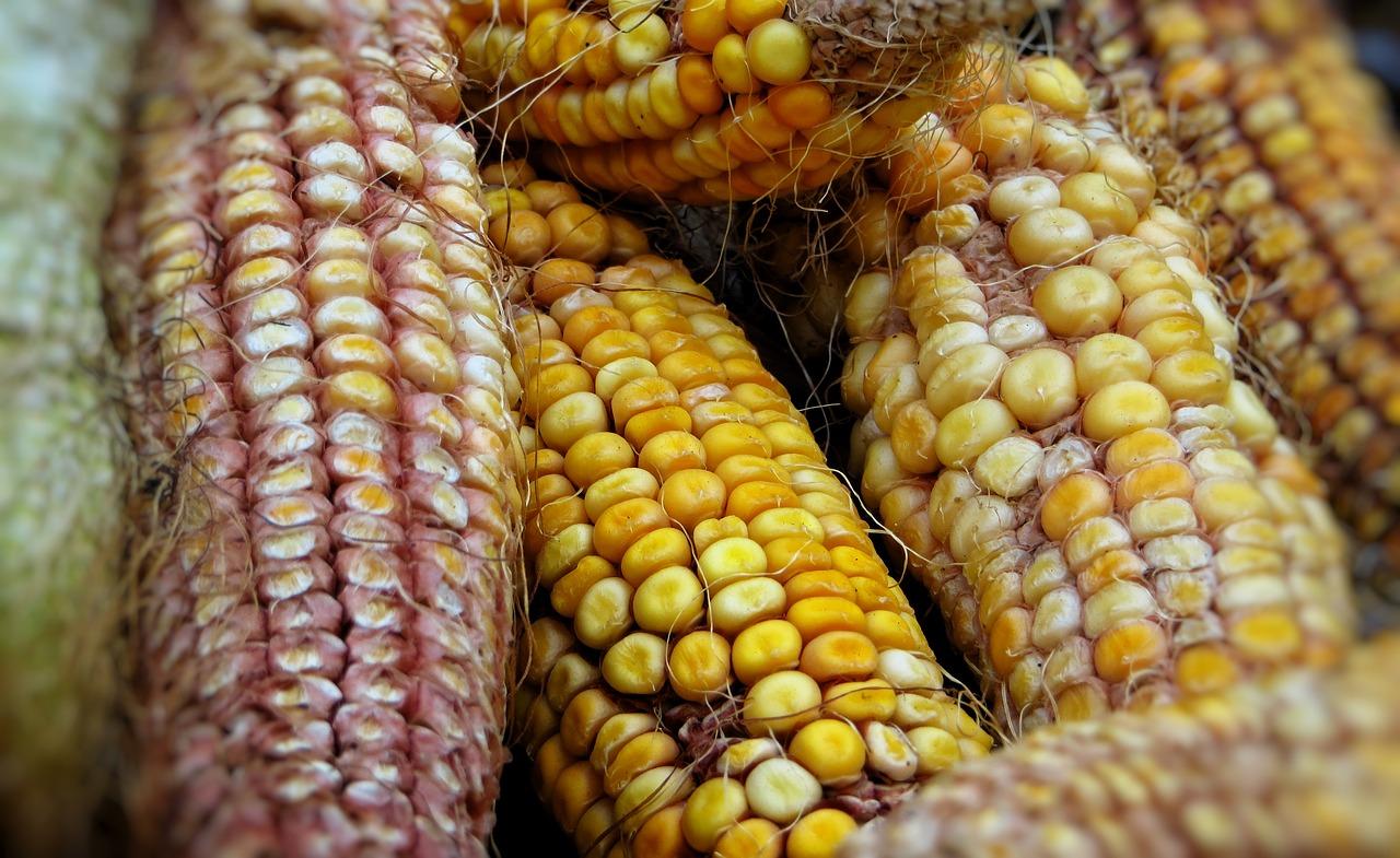 Biomasa de Maíz es el comienzo de la energía renovable