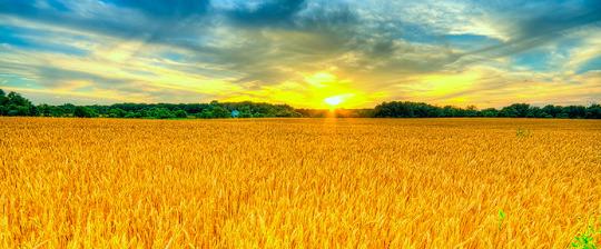 Biomasa; Una apuesta de futuro