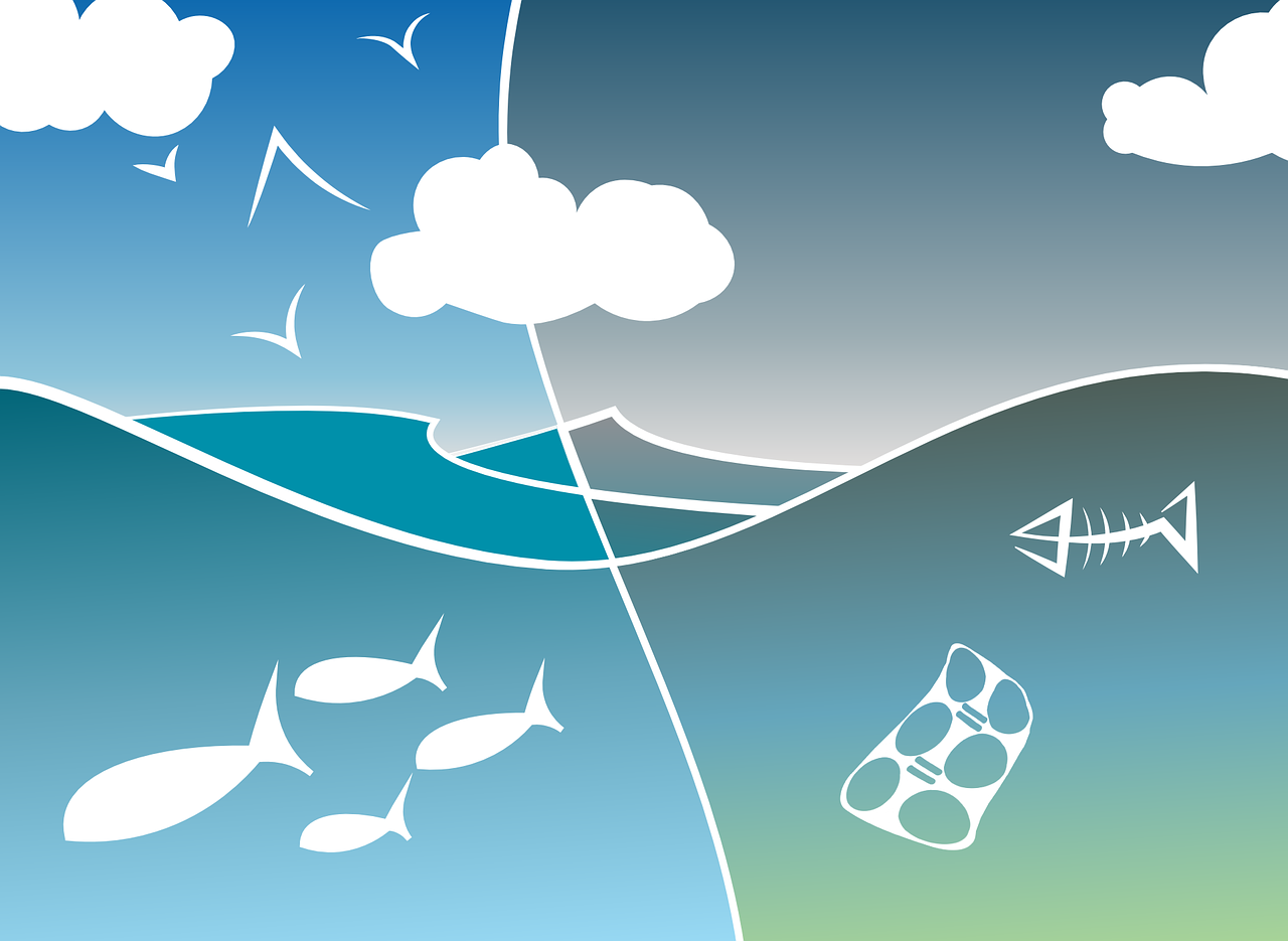Comprender las complejidades de la pirámide de la biomasa