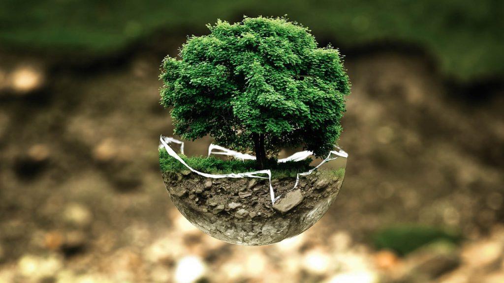 Adaptación a los cambios y pirámide de biomasa